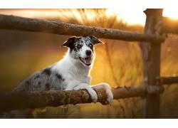 性质,狗,动物626514