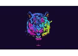 虎,动物,大猫,艺术品,华美,氖629730