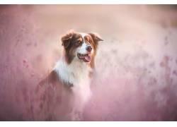 性质,狗,动物627788