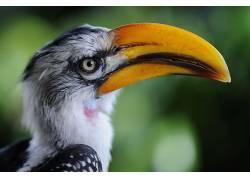 鸟类,动物389005