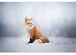 狐狸,动物,雪494125