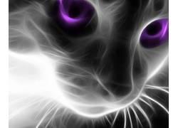 猫,动物,艺术品398493