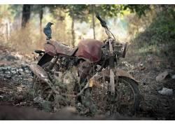 动物,破坏,鸟类,摩托车394412