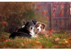 动物,秋季,树叶,狗,在户外,草492169
