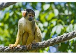 动物,类人猿448618
