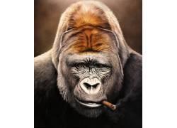 动物,艺术品,数字艺术,大猩猩,雪茄,肖像显示,抽烟,Christiane Vl