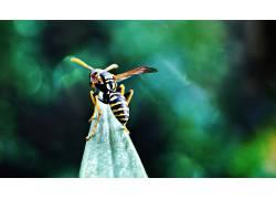 动物,花卉,黄蜂407516