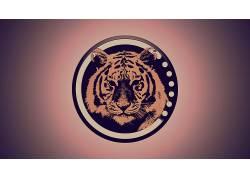 动物,虎,几何586132