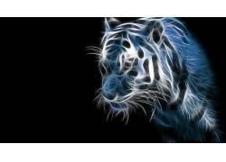 动物,虎,大猫,数字艺术,简单的背景386178