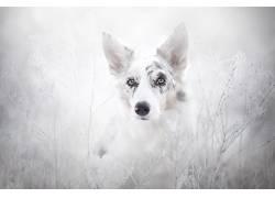 动物,狗490299