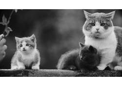 动物,猫,单色,家庭588848