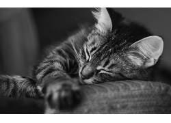 动物,猫,单色448362