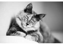 动物,猫,单色493486