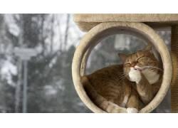 动物,猫,宠物,小猫,小动物,性质,树木,雪402702