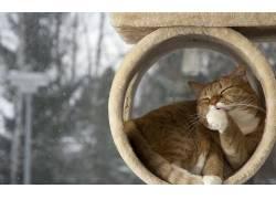 动物,猫,宠物,小猫,小动物,性质,树木,雪409661
