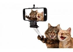 动物,猫,宠物,自拍,手机,自拍杆,幽默,白色背景,照片处理,笑,Phot