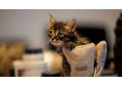 动物,猫,小猫,棒球手套,卡洛斯桑特罗598529