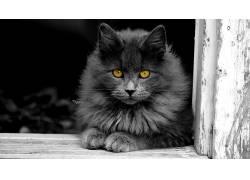 动物,猫,小猫,选择性着色439687