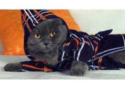 动物,猫,性质448363