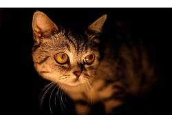 动物,猫,摄影381113