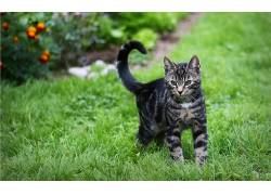 动物,猫,摄影381115
