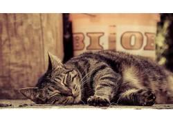 动物,猫,摄影381116