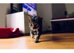动物,猫,摄影381117