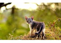 动物,猫,摄影381118