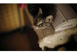 动物,猫,摄影381120