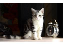 动物,猫,摄影381121