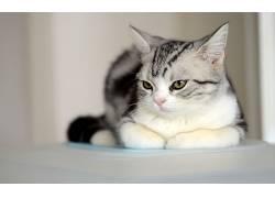 动物,猫,摄影381122