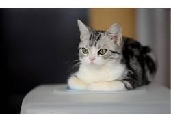 动物,猫,摄影381123