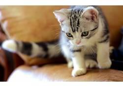动物,猫,摄影381124