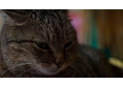 动物,猫,教规581326