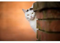 动物,猫,景深,愤怒618727