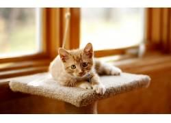 动物,猫,景深457234