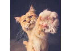 动物,猫,爪子671672