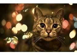 动物,猫,背景虚化448364
