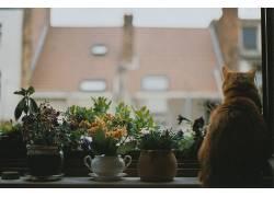 动物,猫,舒适,花卉,植物,窗口648435