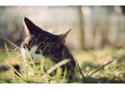 动物,猫,草467493
