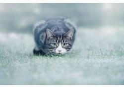 动物,猫,草594139