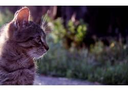 动物,猫447688