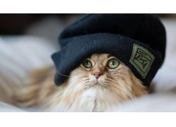 动物,猫449184