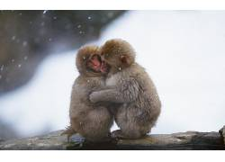 动物,猴,哺乳动物377345