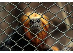 动物,猴480046