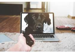 动物,电子,手,狗,在室内,mac书,电脑,笔记本电脑,键盘493725