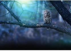 动物,猫头鹰,性质,鸟类648909