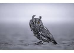 动物,猫头鹰,眨眼,特写599029