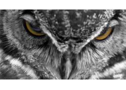 动物,猫头鹰,羽毛,特写,Kenta Iwasa598916