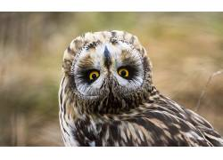 动物,猫头鹰,黄眼睛,景深621881